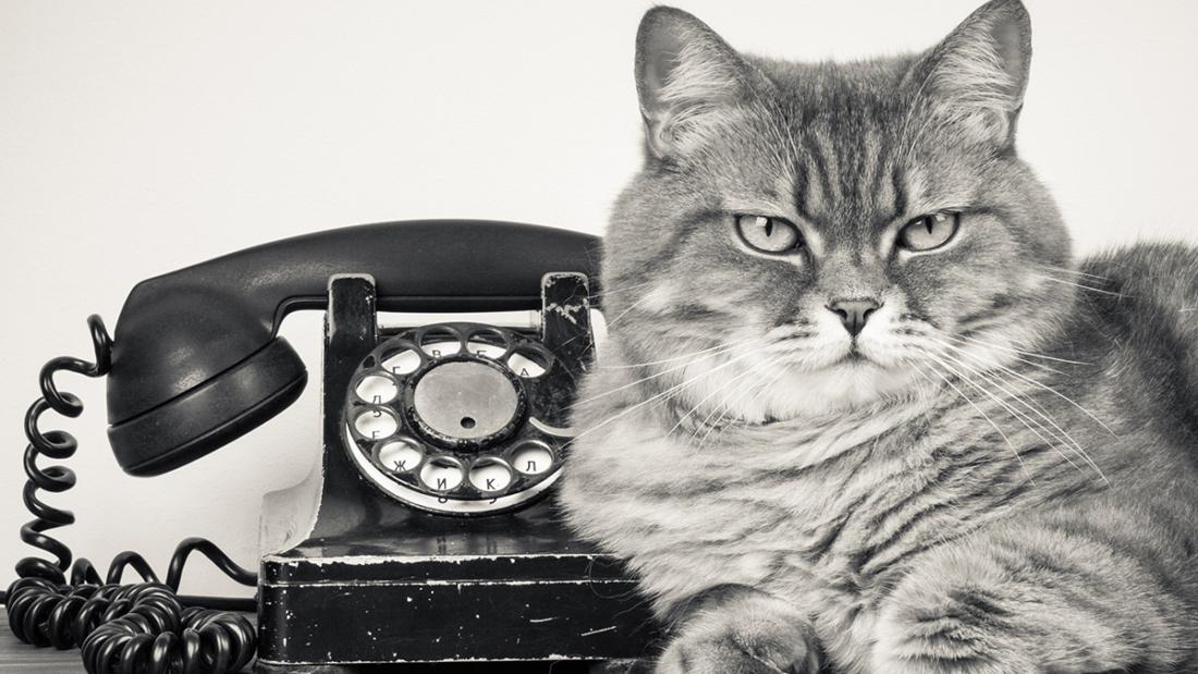 UneChatTelephone