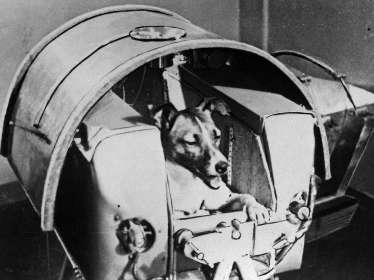 Laïka, ou le martyre des chiens cosmonautes