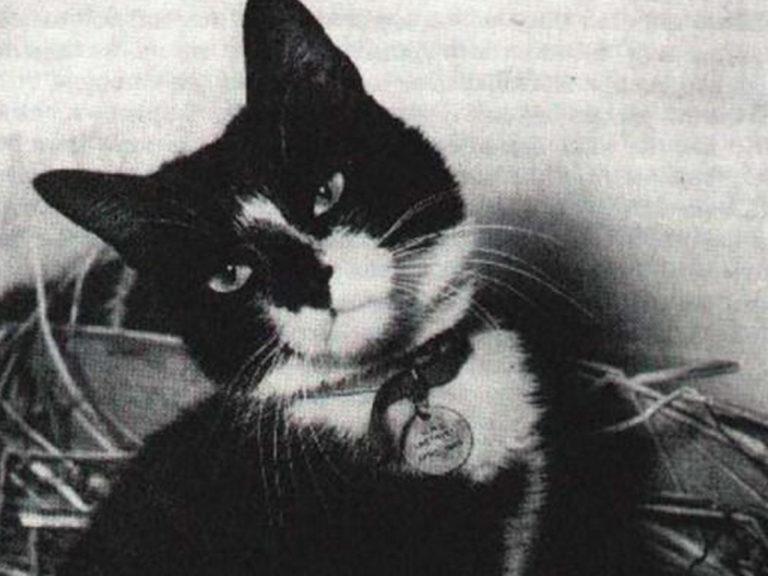 Oscar, le chat-mascotte qui portait malchance … aux Allemands, puis aux Anglais