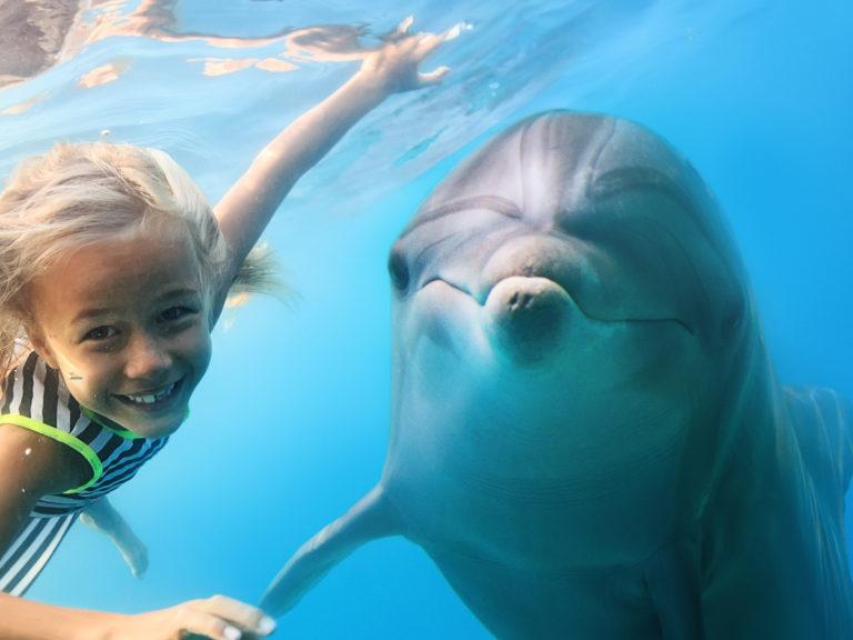 Les dauphins paient-ils de leur vie leur amitié pour l'homme ?