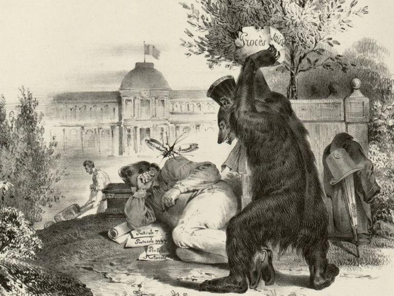 Les animaux devant la Justice : un ours acquitté en 1499