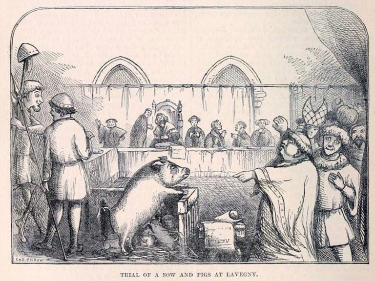 Les animaux devant la Justice – Intro : La potence ou le bûcher