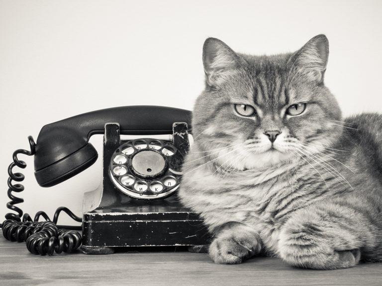 On a fait un téléphone… avec un chat !