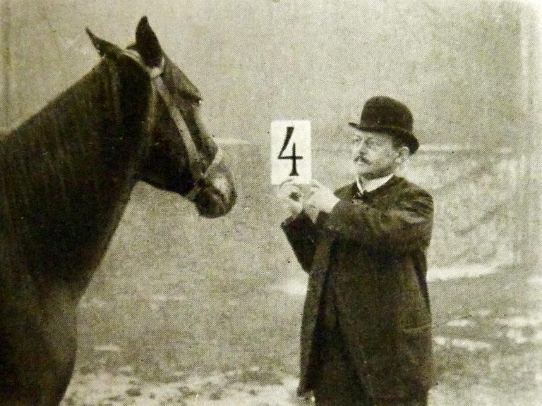 Les chevaux calculateurs, un mystère jamais éclairci