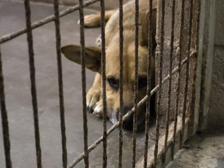 La Déclaration des droits de l'animal