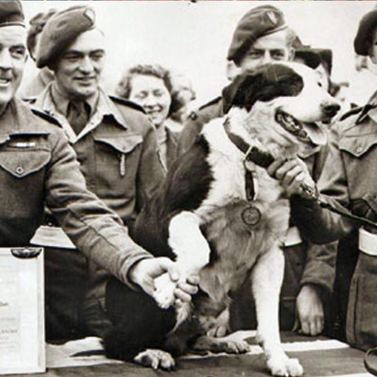 Médaille Dickin : la Victoria Cross pour les animaux !