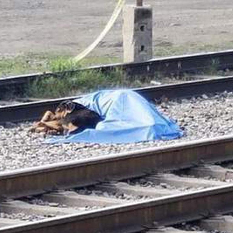 Un chien reste blotti contre le cadavre de son maître