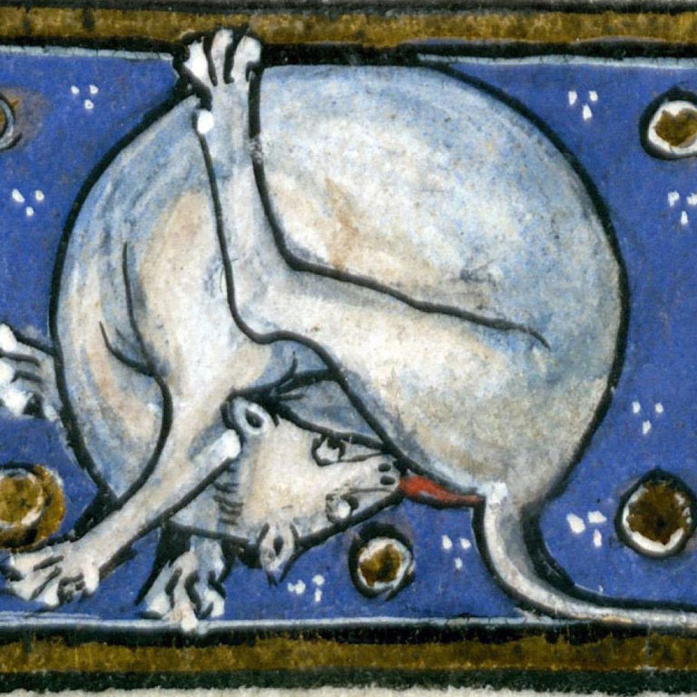 Le chat est un « serviteur du Diable », déclare le pape Grégoire IX en 1233