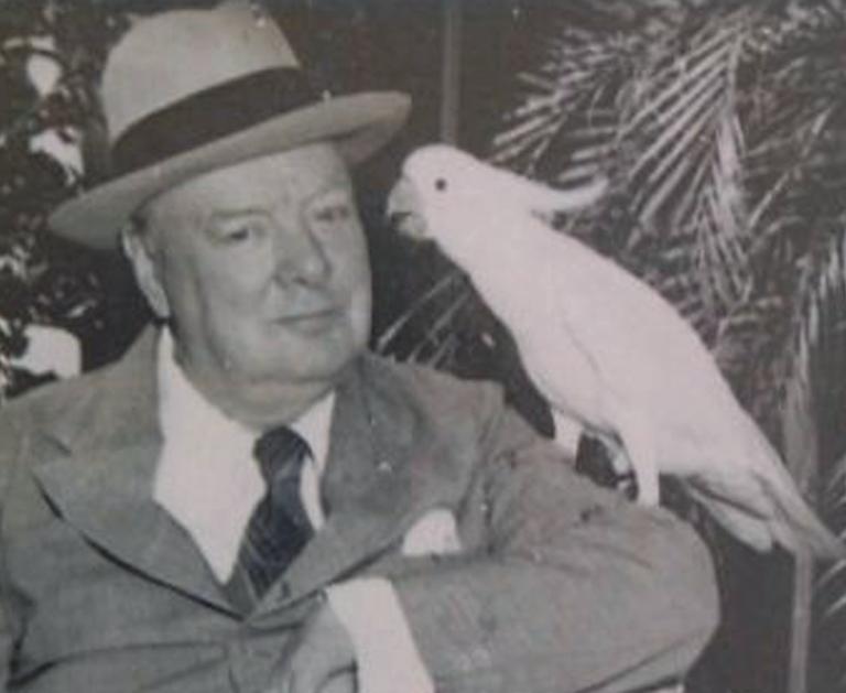 """Fuck Hitler"" – Winston Churchill dressait son perroquet à insulter les nazis"