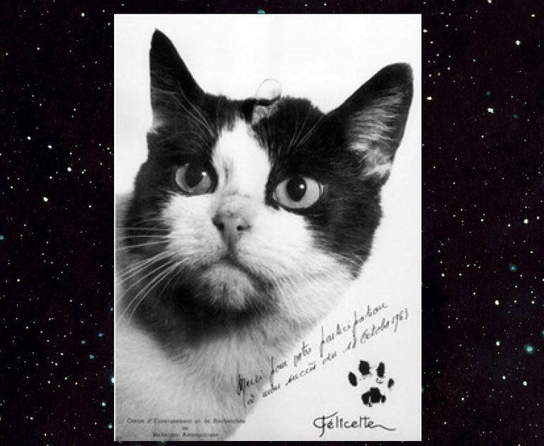 Félicette, le premier chat envoyé dans l'espace
