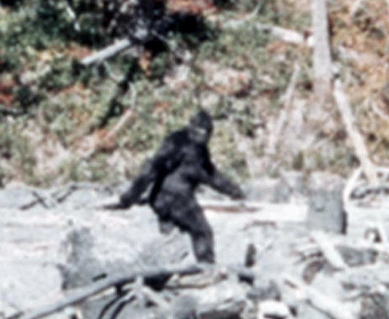 « Bigfoot » – l'hypothétique homme-singe sur la liste des espèces protégées