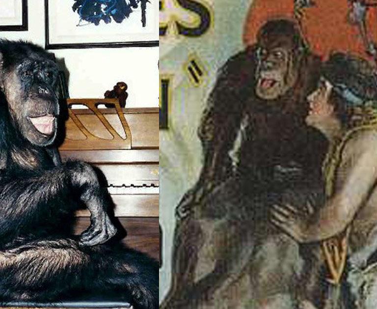 Cheetah est mort, vive Cheetah ! – Qu'est devenu le chimpanzé de Tarzan ?