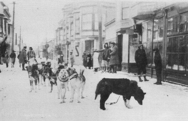 La Course au sérum de 1925 : quand 150 chiens sauvent une ville de la diphtérie