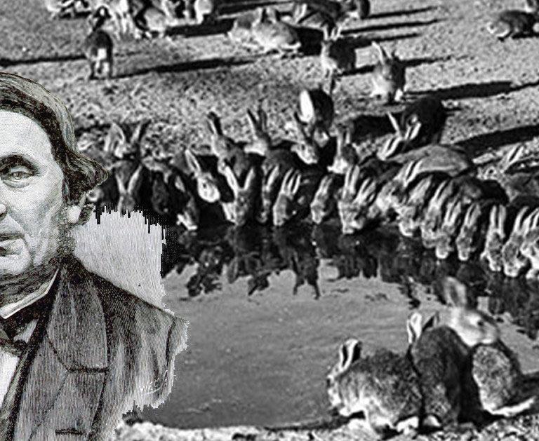 Thomas Austin, le chasseur responsable de l'invasion du lapin en Australie