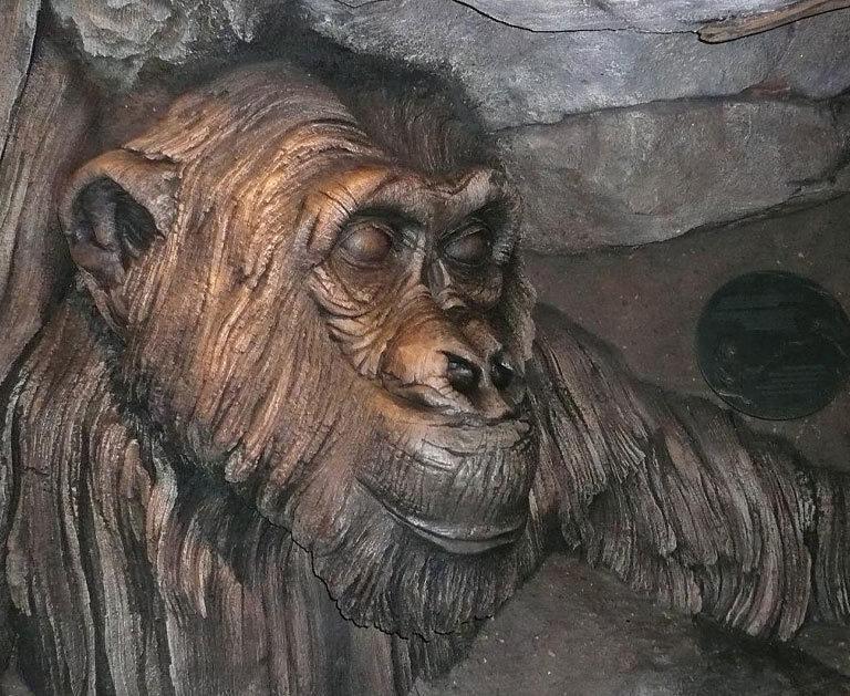 David Greybeard, le chimpanzé qui remet en question la définition de l'Homme