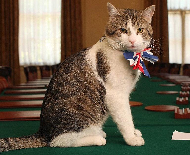 Chats de fonction, chats officiels, quelques vies de chats très particulières