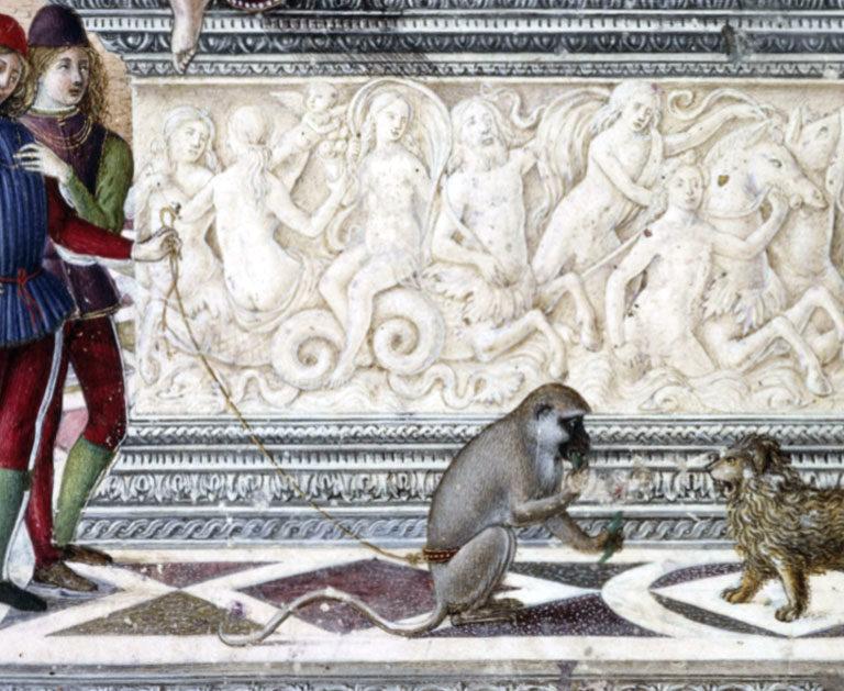 Singes, lions, marmottes, écureuils,… Les drôles d'animaux de compagnie des puissants d'autrefois